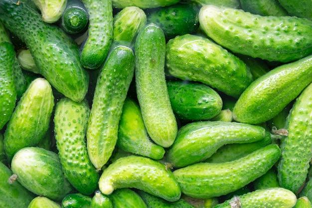 Frische grüne gurke im wasser. natürlicher hintergrund des biologischen lebensmittels Premium Fotos