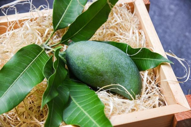 Frische grüne mango- und grünblätter auf holz Premium Fotos