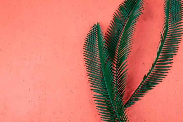 Frische grüne palmblätter auf korallenrotem strukturiertem hintergrund Kostenlose Fotos