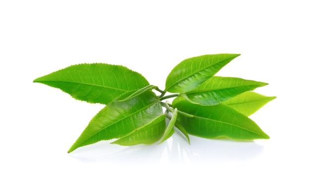 Frische grüne teeblätter isoliert Premium Fotos