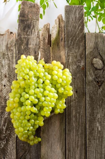 Frische grüne trauben auf altem holzzaun Premium Fotos