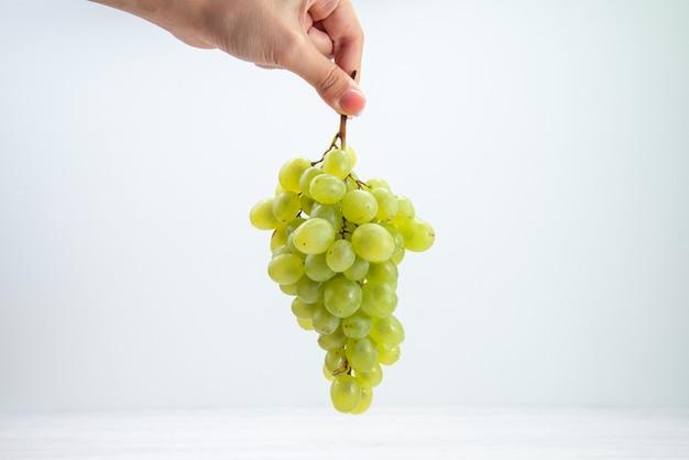 Frische grüne trauben der vorderansicht in den weiblichen händen auf hellweißem saft des hellweißen oberflächenweinweins Kostenlose Fotos