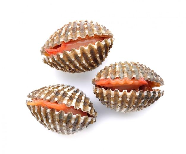 Frische herzmuschelmeeresfrüchte auf weiß Premium Fotos