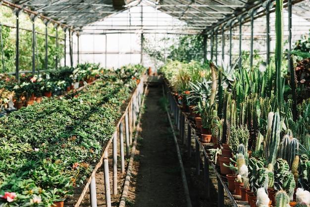 Frische pflanzen, die im gewächshaus wachsen Kostenlose Fotos