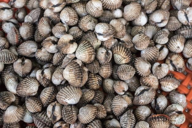 Frische rohe seekuchenmuscheln am meeresfrüchtemarkt Premium Fotos