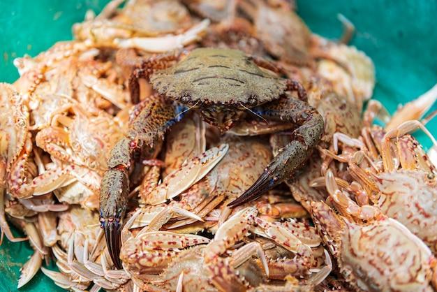 Frische rote krabbe im behälter. frische blaue schwimmkrabbe am meeresfrüchtemarkt Premium Fotos
