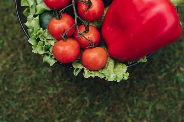 Frische saftige tomatenkopfsalatgurke im eimer auf draufsicht des grünen sommergrases Premium Fotos