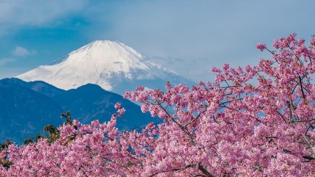 Frische sakura-blüte mit fuji-gebirgshintergrund Premium Fotos