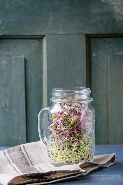 Frische sprösslinge im weckglas Premium Fotos
