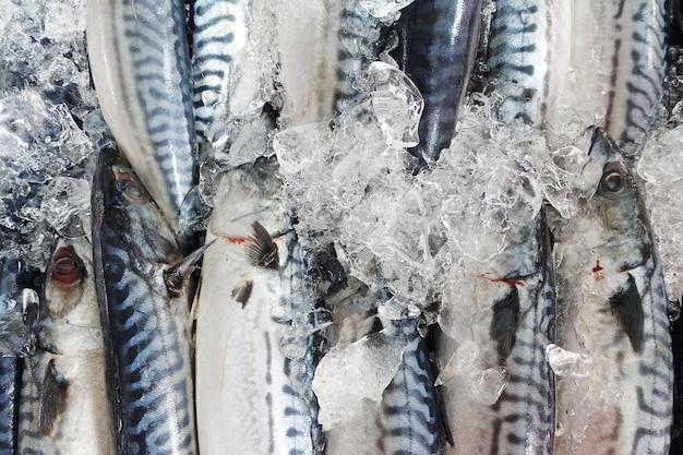 Frischer fisch auf dem markt Premium Fotos
