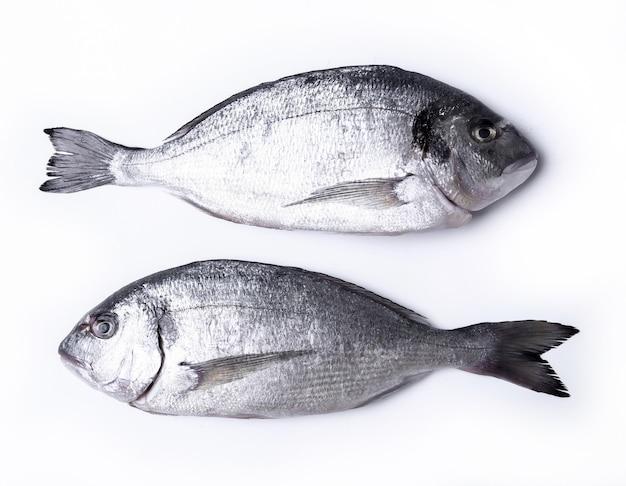 Frischer fisch auf weiß Kostenlose Fotos