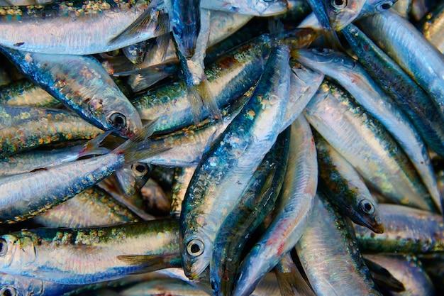 Frischer fisch der sardinen im fischmarkt Premium Fotos