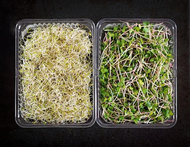Frischer mischung microgreens salat, draufsicht Premium Fotos
