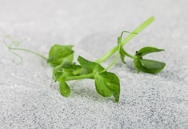 Frischer süßer sprössling der grünen erbse. microgreen Premium Fotos