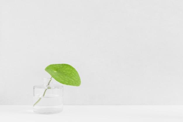 Frisches grünes blatt in der glasflasche gegen weißen hintergrund Kostenlose Fotos