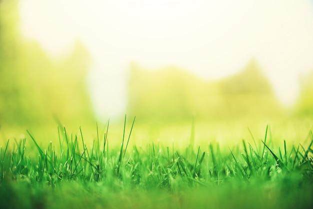 Frisches grünes frühlingsgras mit sonne leckt effekt. abstrakter naturhintergrund. banner Premium Fotos
