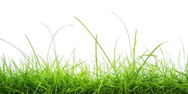 Frisches grünes gras auf weißem hintergrund Kostenlose Fotos