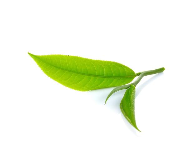 Frisches grünes teeblatt isoliert Premium Fotos