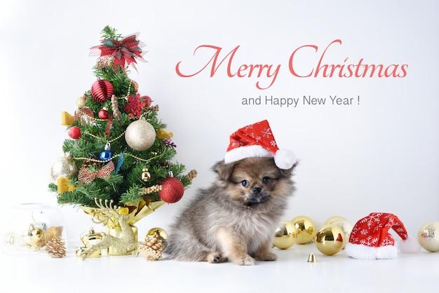 Frohes neues jahr, weihnachten, hund in santa claus hut, feier bälle und andere dekoration Premium Fotos
