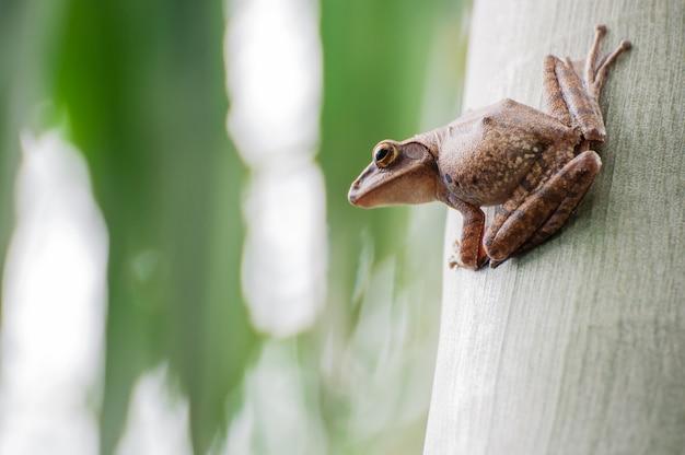 Frosch, der auf baum sitzt Premium Fotos