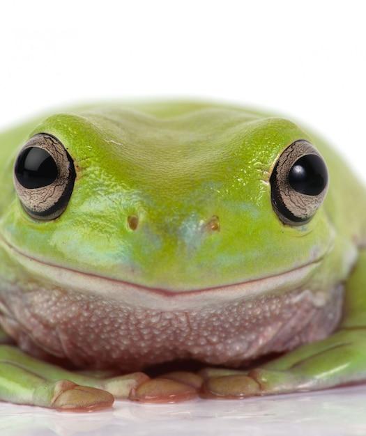 Frosch hautnah Kostenlose Fotos