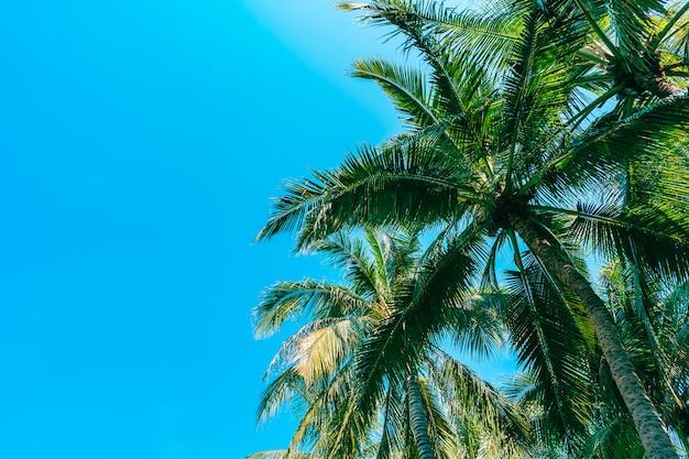 Froschperspektive der schönen kokosnusspalme auf blauem himmel Kostenlose Fotos