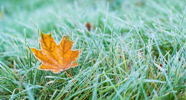 Frost auf blatt und gras. Premium Fotos