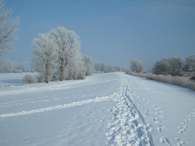 Frost Schnee Spuren Deich Schonen Winter Hoarfrost Kostenlose Foto