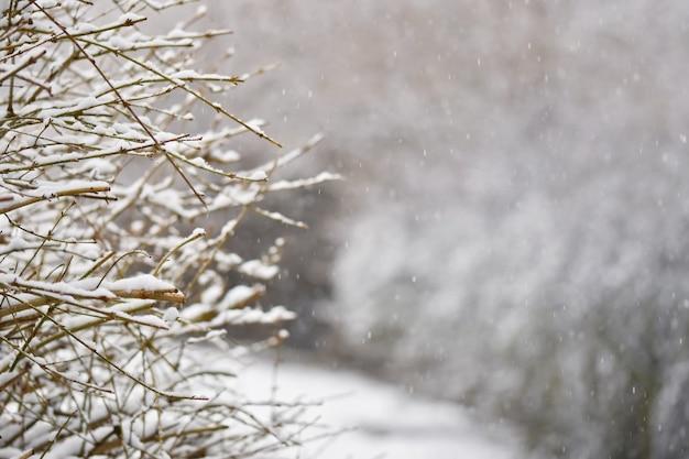 Frost und schnee auf ästen. schöner winterjahreszeithintergrund. foto der gefrorenen natur. Kostenlose Fotos