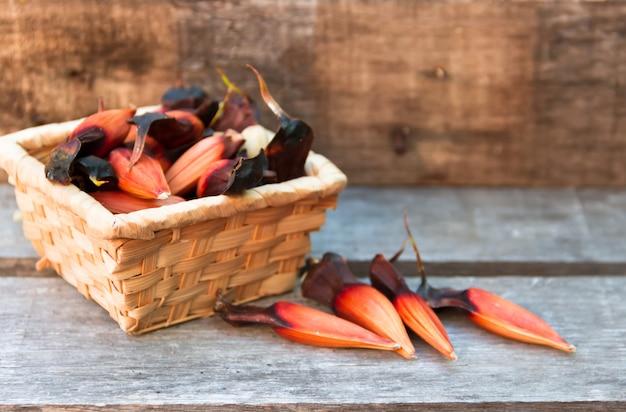 Frucht der araukarien Premium Fotos
