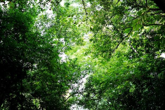 Fruchtbare grüne blätter und bäume Premium Fotos