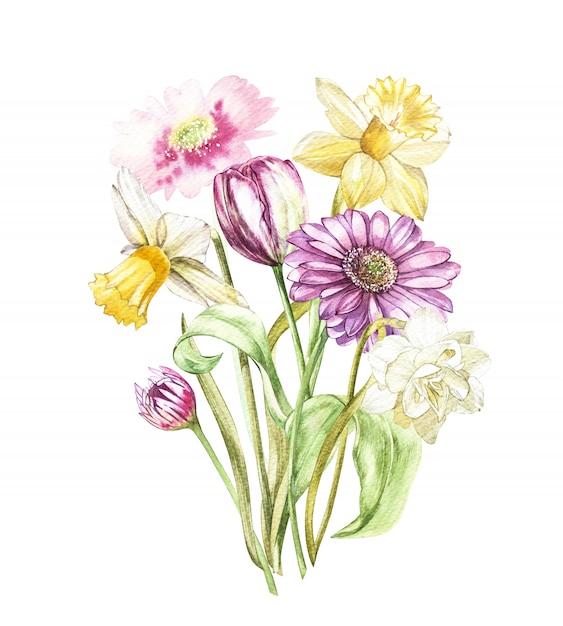Frühling blüht die narzisse und tulpe, gerberalooking an gezeichneter illustration des regals aquarells hand. Premium Fotos