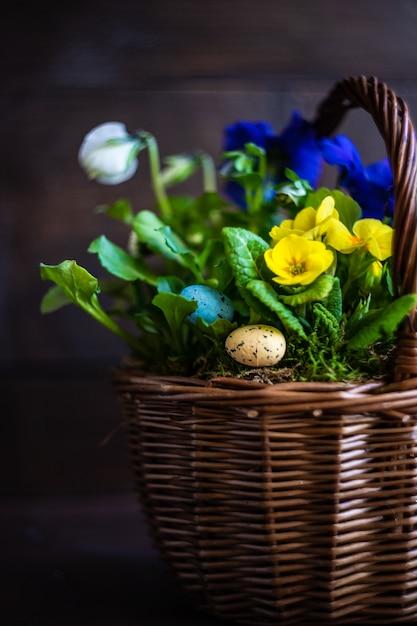 Frühling blumenkonzept Premium Fotos