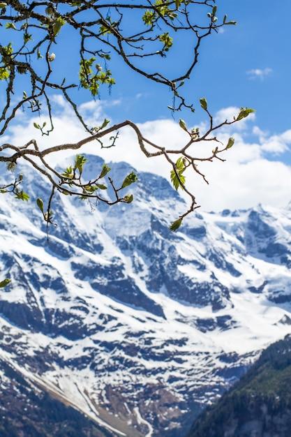 Frühling in den alpen Premium Fotos