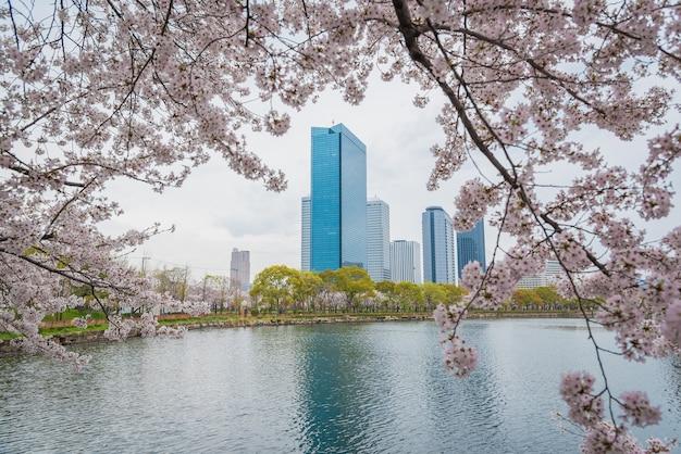 Frühling kirschblüten auf dem burggraben von himeji castle, japan Premium Fotos