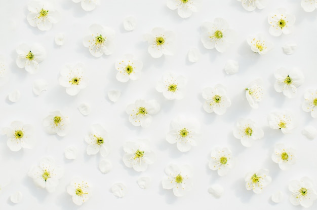 Frühlingsblüten-kirsch-draufsicht. blumiges kirschmuster. Premium Fotos