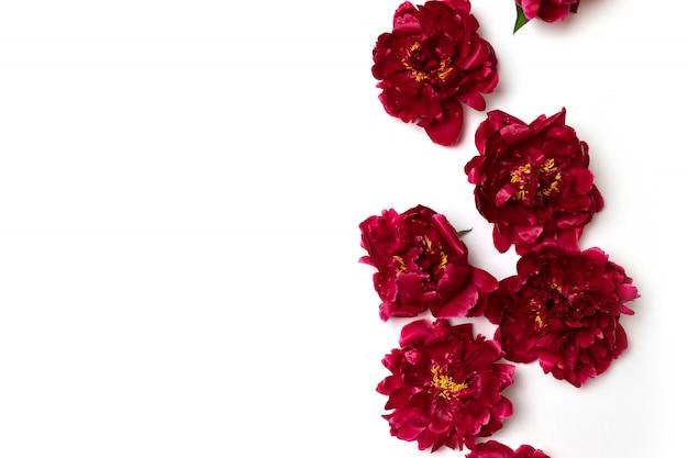 Frühlingsblumen zusammensetzung. blumenmuster der roten pfingstrose blüht auf weiß Premium Fotos