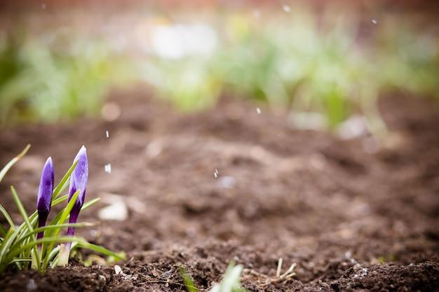 Frühlingserwachen Premium Fotos