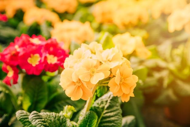 Frühlingshintergrund mit gelben blumen im sonnenlicht Kostenlose Fotos