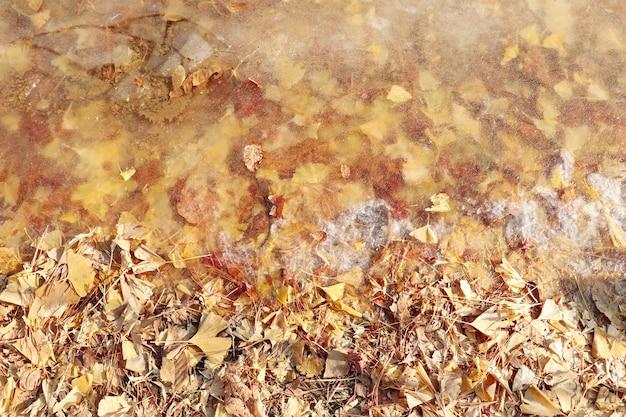 Frühlingshintergrund mit getrockneten blättern im boden Premium Fotos