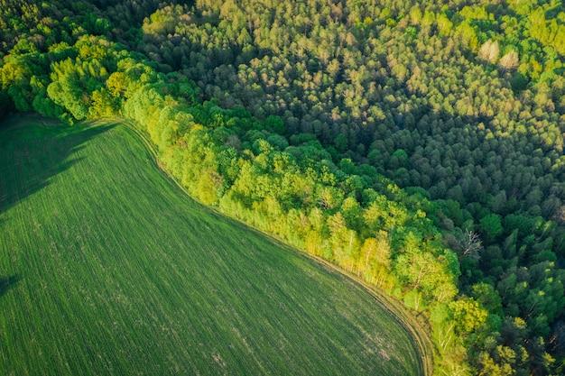 Frühlingslandschaft mit laubwald aus flughöhe. schöner wald im abendlichen warmen licht Premium Fotos
