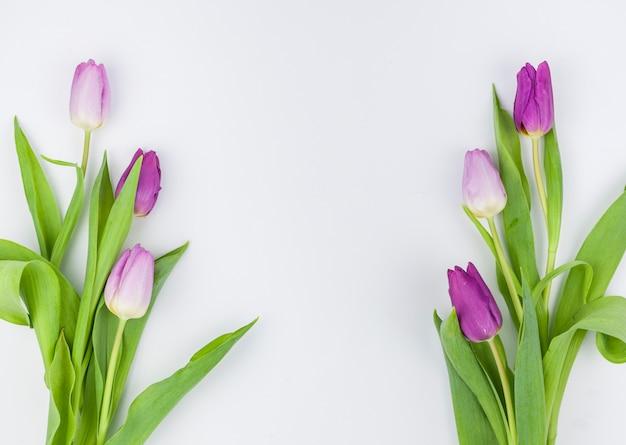 Frühlingstulpenblumen lokalisiert auf weißem hintergrund Kostenlose Fotos