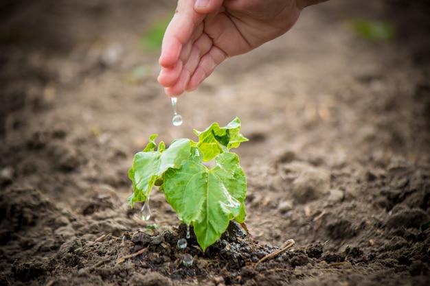 Für ein neues leben sorgen. junge pflanzen gießen. die hände des kindes selektiver fokus Premium Fotos