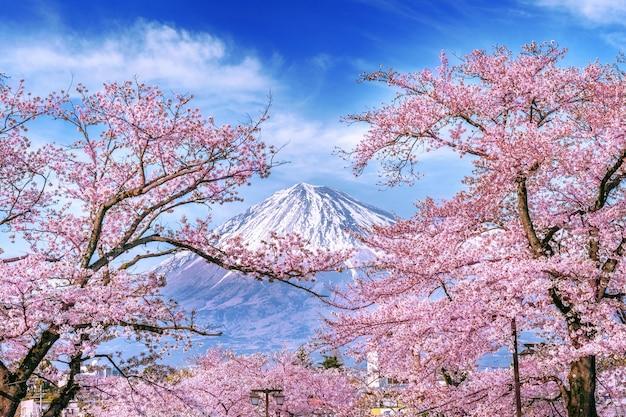 Fuji berg und kirschblüten im frühjahr, japan. Kostenlose Fotos