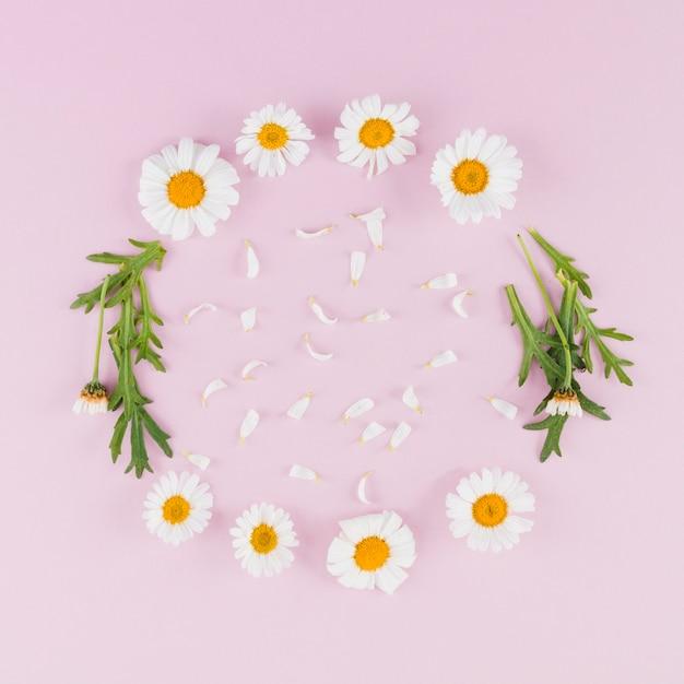 Gänseblümchen der draufsicht kreisten rahmen ein Kostenlose Fotos