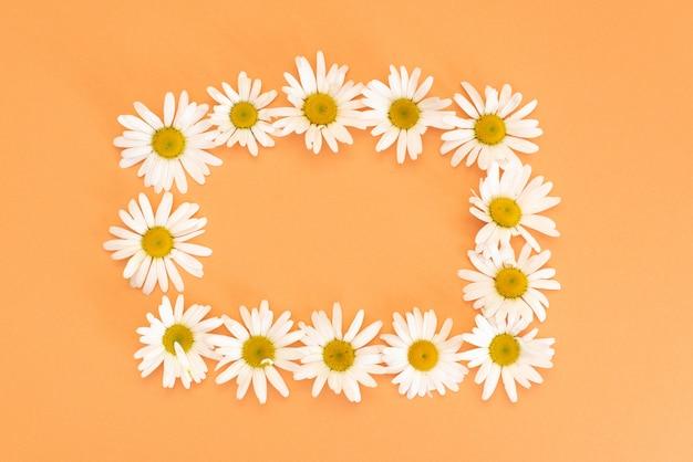 Gänseblümchen und grünblätter auf dem korallenroten hintergrund Premium Fotos