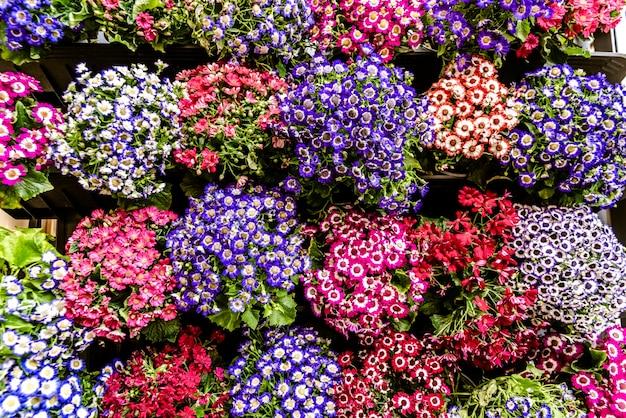 Gänseblümchen vieler farben, die an der fassade eines hauses hängen. Premium Fotos