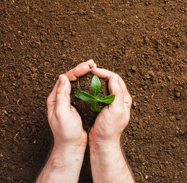 Gärtner, der aus den grund pflanzt Kostenlose Fotos