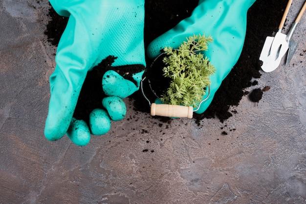 Gärtner, der eine grünpflanze im eimer pflanzt Kostenlose Fotos