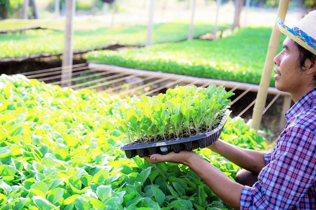 Gärtner halten gemüsetabletts. Premium Fotos